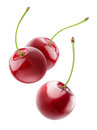 Cherries flying in the air three falling cherry fruits on white background with clipping path Royalty Free Stock Photos