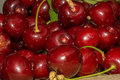 Cherries lots of fresh red Royalty Free Stock Image