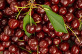 Cherries lots of fresh red Royalty Free Stock Photos