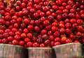 Cherries red in the market Royalty Free Stock Photo