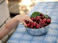 Cherries small hand taking fresh Stock Images