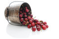 Cherries Spilling Out of Bucket Stock Image