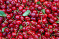 Cherries with stems and leaves Royalty Free Stock Photo