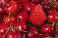 Cherries and Strawberry Royalty Free Stock Photo
