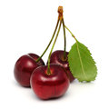 Cherries three isolated on white background with clipping path Stock Images