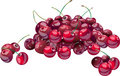 Cherries, vector Royalty Free Stock Images
