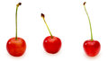 Cherries in a white background pictured group of each pictutre were photographed independently Stock Photo