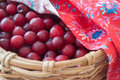 Cherries in wicker basket fresh Stock Image