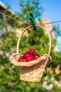 Cherry in a basket is hanging on clothespin