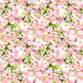 Cherry blossom - apple, sakura flowers . Floral seamless pattern. Watercolor Royalty Free Stock Photo