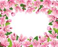 Cherry blossom background. Pink spring flowers frame. Cartoon style vector illustration