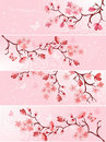 Cherry blossom, banner. Royalty Free Stock Photos