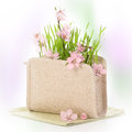 Cherry blossom beauty in nature with in cosmetic bag Stock Photos