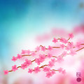 Cherry blossom branch vector Photo stock