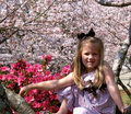 Cherry Blossom Child Stock Images