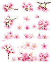 Cherry blossom collection Royalty Free Stock Photo