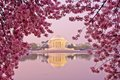 Cherry Blossom Festival in Washington, DC Royalty Free Stock Image