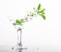 Cherry blossom in glass Royalty Free Stock Photo