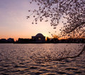 Cherry Blossom and Jefferson Memorial Royalty Free Stock Photos