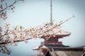 Cherry blossom in kiyomizu temple kyoto with sakura japan the picture was taken during sakura spring located on the Stock Photo