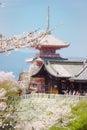 Cherry blossom in kiyomizu temple kyoto with sakura japan the picture was taken during sakura spring located on the Royalty Free Stock Photo