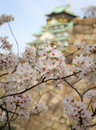 Cherry blossom in osaka castle osaka japan the picture was taken during sakura spring photo taken on april Stock Photo