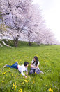 Cherry blossom parent child and blossoms of japan Stock Photography