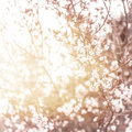 Cherry blossom photo of beautiful abstract natural background fine art spring time season apple blooming in sunny day floral Stock Photos