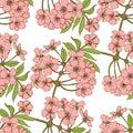 Cherry blossom seamless pattern Royalty Free Stock Photo