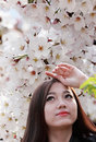 Cherry blossom season charming asian girl enjoying spring scenery under the trees Royalty Free Stock Photo