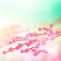 Cherry blossom tree branch Photographie stock