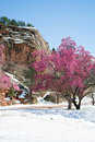 Cherry blossom trees at Red Rock Canyon Open Space Colorado Spri Royalty Free Stock Photo