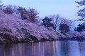 Cherry blossoms and Castle Royalty Free Stock Photo