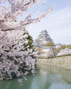 Cherry blossoms and castle in spring japan fully blooming himeji registered as unesco world heritage Royalty Free Stock Photo