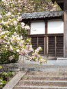 Cherry blossoms at the gates of a Buddhist temple in Japan Royalty Free Stock Photo