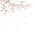 Cherry blossoms hand drawn blossom branch with flying petals Stock Photos
