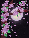 Cherry blossoms on night sky Royalty Free Stock Images