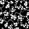 Cherry blossoms seamless pattern background vector illustration Stock Images