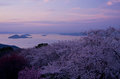 Cherry blossoms and seto inland sea in the evening in april Stock Photos