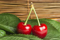Cherry branch with leaves two cherries close up studio shot Royalty Free Stock Photos