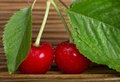 Cherry branch with leaves two cherries close up studio shot Royalty Free Stock Image