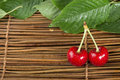 Cherry branch with leaves two cherries close up studio shot Royalty Free Stock Images