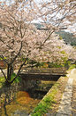 Cherry brossom at path of phylosophy in kyoto japan Royalty Free Stock Photography
