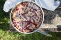 Cherry clafoutis. Homemade cherry pie on rustic background Royalty Free Stock Photo