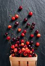Photo of cherry in basket Royalty Free Stock Photo