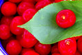 Cherry fruit close-up Royalty Free Stock Photo