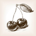 Cherry fruit sketch vector illustration berry style old hand drawn engraving imitation berry Royalty Free Stock Photography