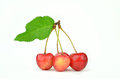 Cherry fruit wet fruits with green leaf on white background Royalty Free Stock Images