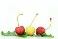 Cherry fruits wet on white background Royalty Free Stock Photo