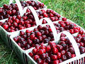 Cherry Harvest Stock Photos